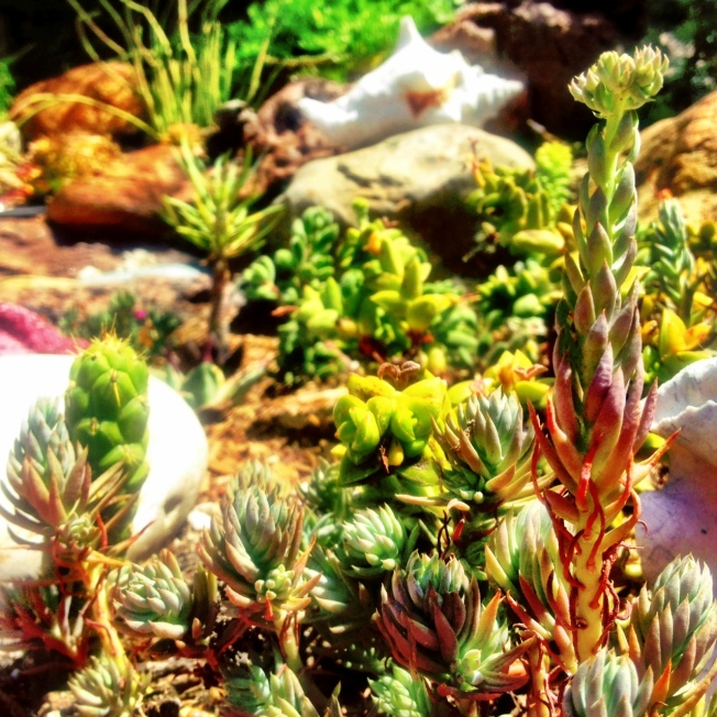 How to Grow Succulents from The Wanderer Guides Blog. #gardening #succulents