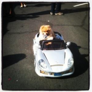 San Diego Farmer's Market Schedule from The Wanderer Guides Blog. #cute #puppy #sandiego